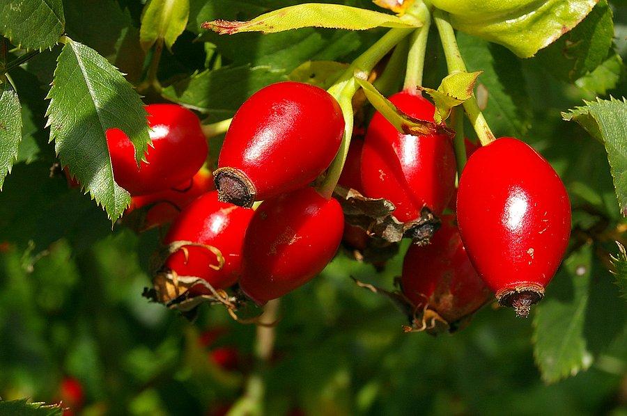 Plody jesene a dobroty z nich